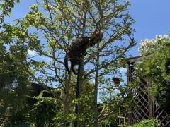 Ich kann klettern!