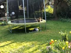 #WIRBLEIBENZUHAUSE und im Garten 2