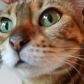 Ihre schönen grünen Augen