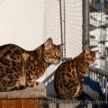 Koda und Loki auf dem Balkon