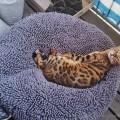 Koda im neuen Katzensitzsack