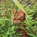Loki im Dschungel